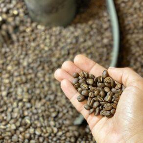 kawah-coffee-wholesale-1