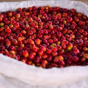 kawah-coffee-wholesale-5